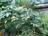 džungle v mém skleníku