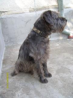 FOTKA - Můj pes Roky
