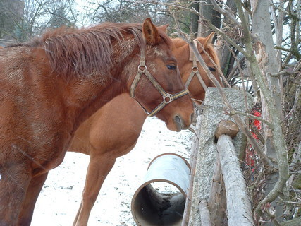 FOTKA - krmení koní