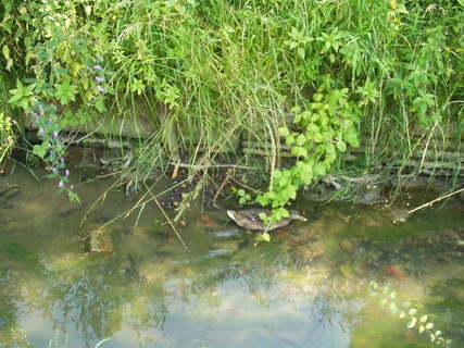 FOTKA - Potok, voda, káčata