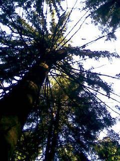 FOTKA - strom v lese : )