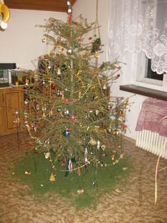 FOTKA - když stromeček opadá :D