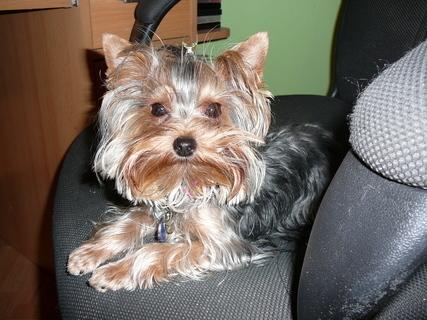FOTKA - bela-á zase na její oblíbené židličce