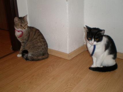 FOTKA - kočky