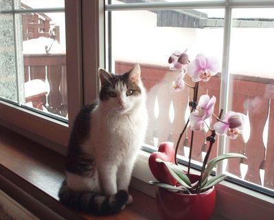 FOTKA - Nelly a Valentinky / 14.2.2009/