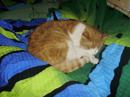 FOTKA - Takový pelíšek mají u nás kočky :)