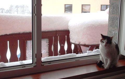 FOTKA -  Nelly a dnešní  sníh - 18.2.2009 .