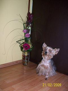 FOTKA - Náš mazlíček s květinou =o)