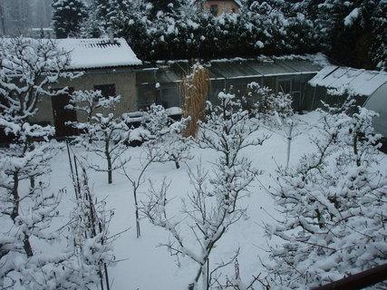 FOTKA - zasněžená zahrada 21.2.09