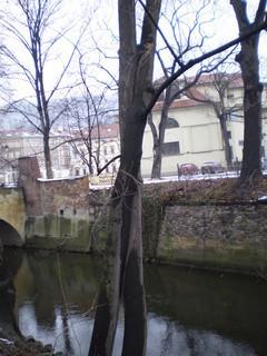 FOTKA - Objímající se stromy