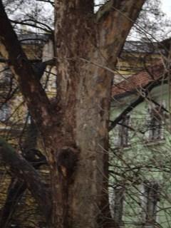 FOTKA - Kmen stromu..............