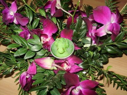 FOTKA - žába v kytce:)
