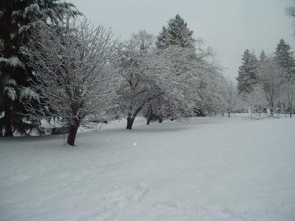 FOTKA - Naše zahrada v zimě