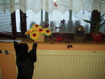 FOTKA - Chci se podívat z okna