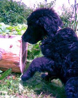 FOTKA - Mám ráda dřevo