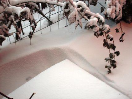 FOTKA - 24.2.2009 - asi už poslední čerstvě napadány sníh.