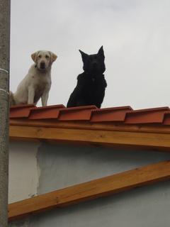 FOTKA - Ze střechy se hlídá nejlépe