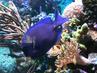 Rybky v modrém