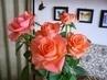 růže  95