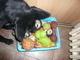 Jessy a její hračky00