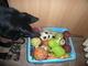 Jessy a jej� hra�ky
