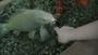 Tropical Islands - zlatá rybko splň mi přání