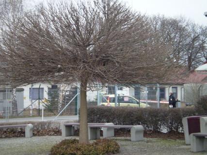 FOTKA - Strom v Letňanech a lavičky