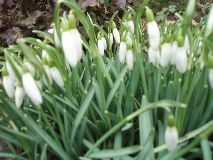 FOTKA - jaro na zahradě ,,,,,,