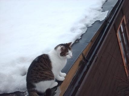 FOTKA - Nelly na střeše - 28.2.2009.