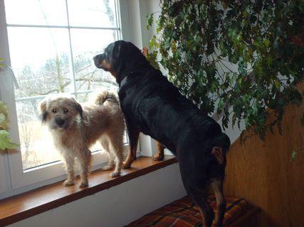 FOTKA - 8.3.2009  - Roxy a Aisha hlídají !