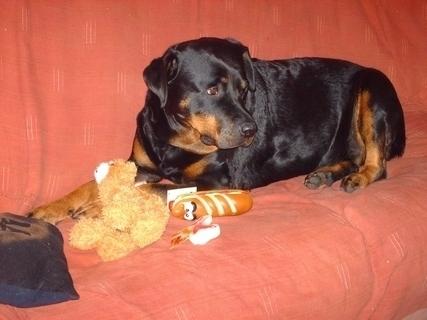 FOTKA - Roxy  s dárky k narozeninám / 7 let/   - 8.3.2009.