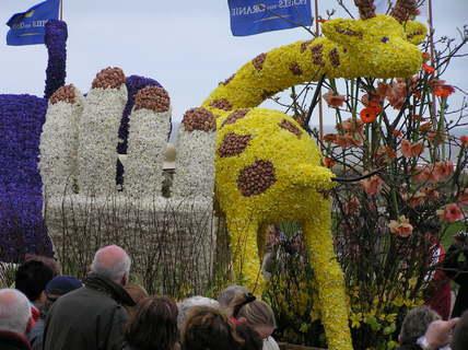 FOTKA - Něžná voňavá žirafa z narcisů