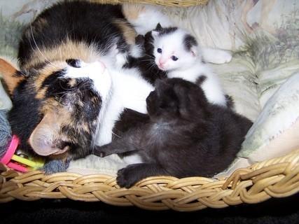 FOTKA - Spokojená rodinka