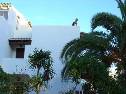 FOTKA - Mallorca - pejsek na střeše