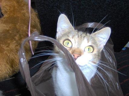 FOTKA - Zvědavá kočička