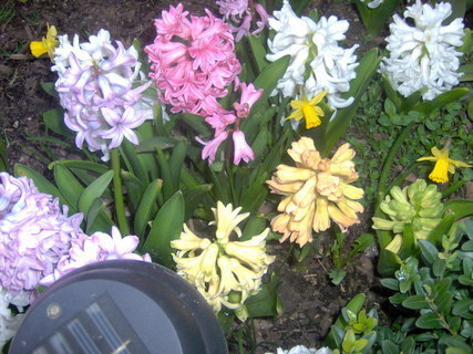 FOTKA - Už bude jaro
