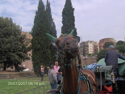 FOTKA - Řechtající koník