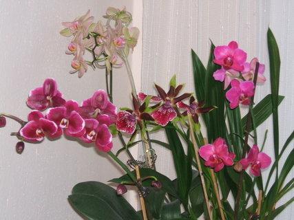 FOTKA - orchideje