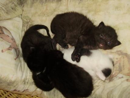 FOTKA - kočičí mimina