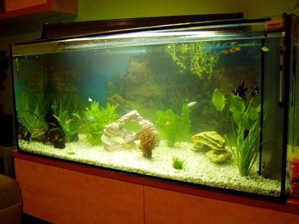 FOTKA - naše akvarium velké