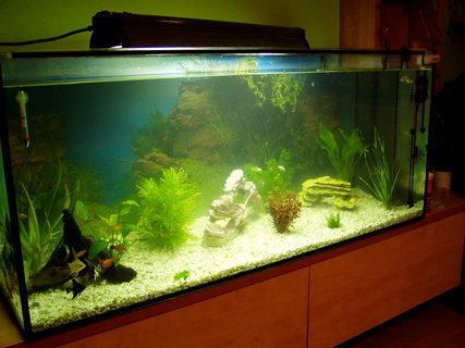 FOTKA - naše akvarium