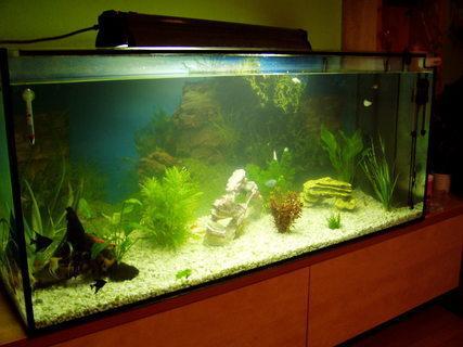 FOTKA - akvarium1