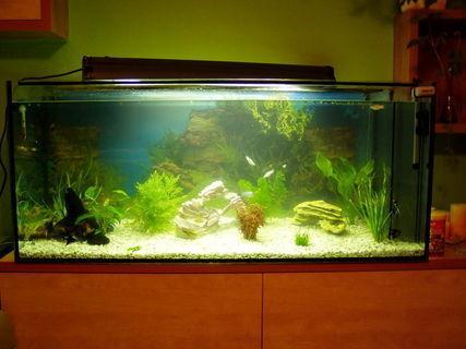 FOTKA - akvarium2