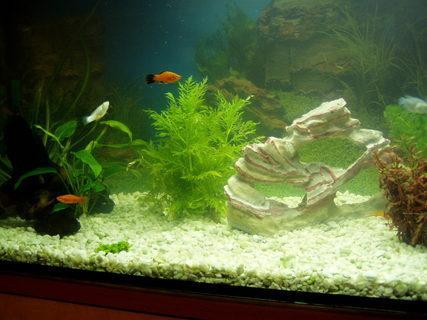 FOTKA - akvarium