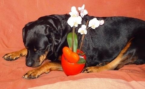 FOTKA - Roxy a orchidee.