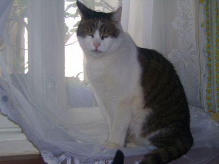 FOTKA - kočičák