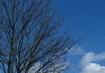Obloha modř