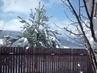 19.3.2009 - doufam , že  poslední sníh letošní zimy na záhradě!
