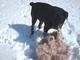 Aisha a Roxy  blbnou na dnešním /19.3.2009/  čerstvým sněhu , který napadal přes noc.