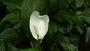 Tropical Islands - pěkný květ